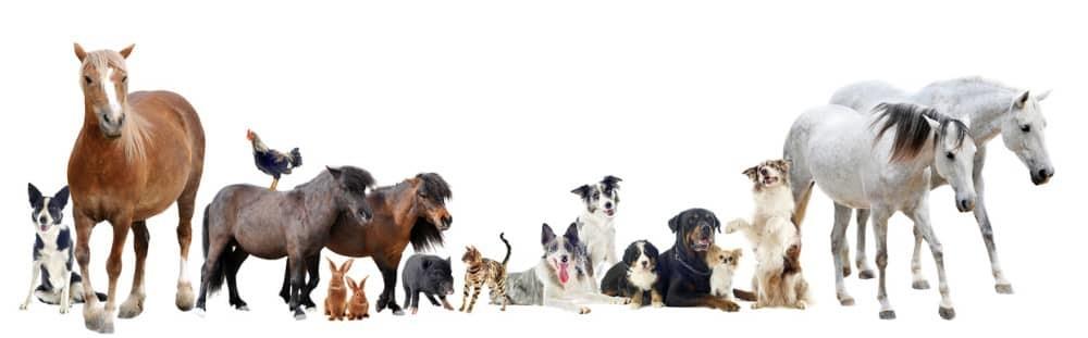 Bild Tierhalter Haftpflichtversicherung
