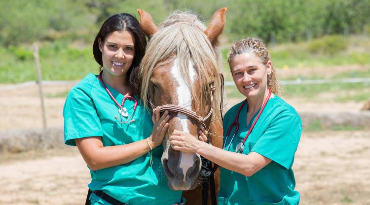 Bild Pferdeversicherung